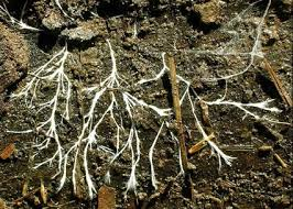 soil-fungi.png