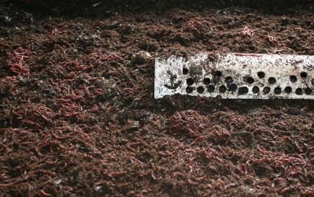 worm-feeding-web.jpg